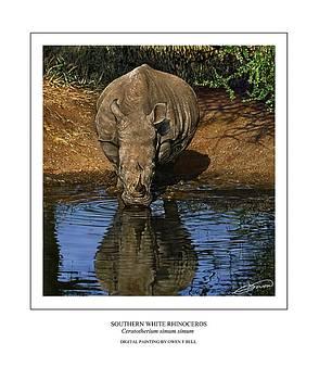 Southern White Rhinoceros at Waterhole by Owen Bell