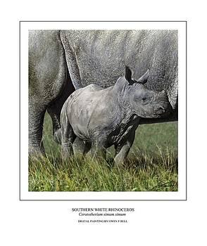 SOUTHERN WHITE RHINOCEROS CALF Ceratotherium simum simum by Owen Bell