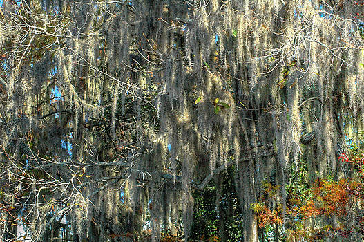 Ronald T Williams - Spanish Moss