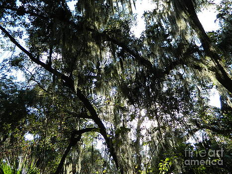 Spanish Moss by Sara  Mayer
