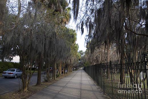 Tim Mulina - Spanish Moss Sidewalk
