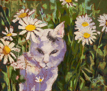 Spark in the Daisies by Barbara Torke