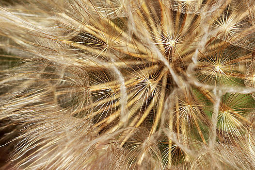Sparkling Wildflower by Sandi Blood