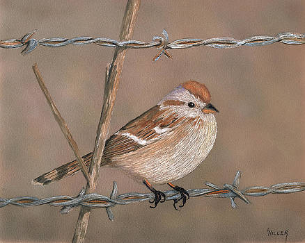 Sparrow by Linda Hiller