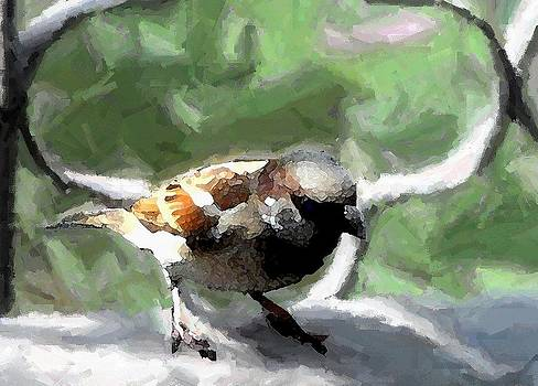 Sparrow by Shiladitya Sinha