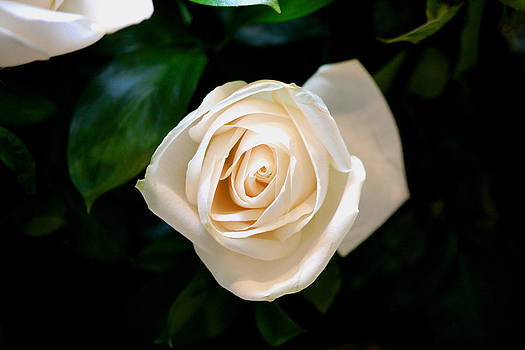 Special Rose For You - I Love You by Enrique Rueda