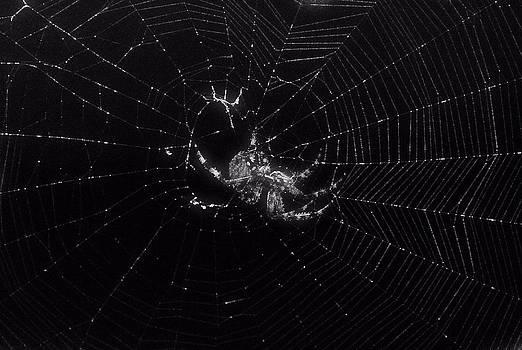 Spider 1 by Judith Szantyr