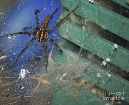 Spider On Web by Art Hill Studios
