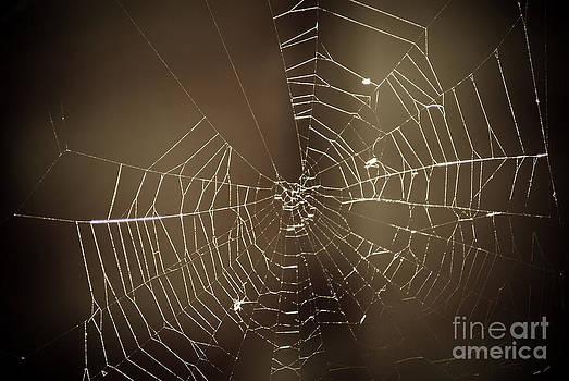 Yhun Suarez - Spider Web 1.0