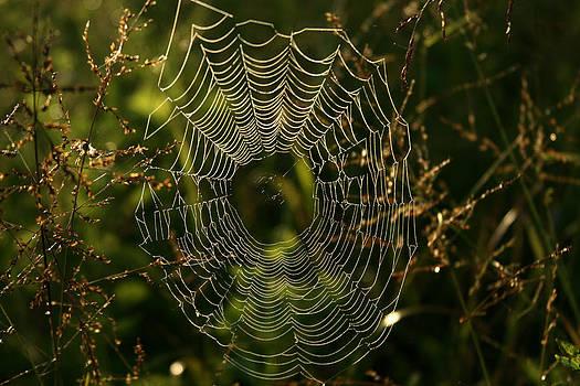 Spider Web by Karen Lawson