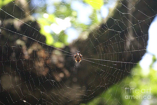 Spider Web by Ronald Williamson