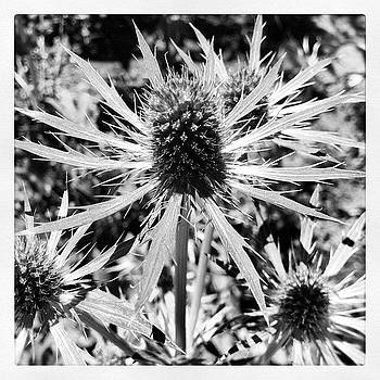 Spiny Cactus Bw by Susan Smela