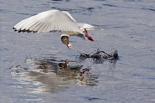 Splash and Grab by Bob Falconer