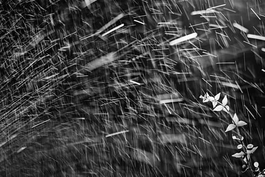 Splash by Victor Bezrukov