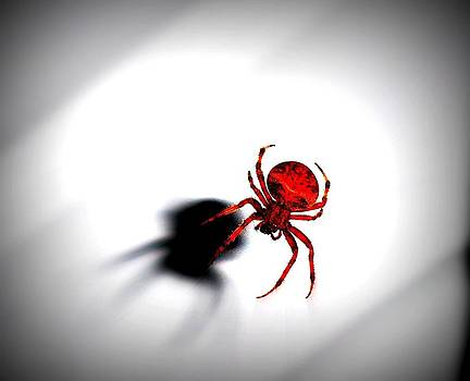 Kimberly Perry - Spooky Spider