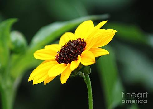 Spot of Yellow by Theresa Willingham