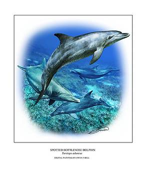 Spotted Bottlenose Dolphin by Owen Bell