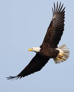 Spread Eagle  by Glenn Lawrence