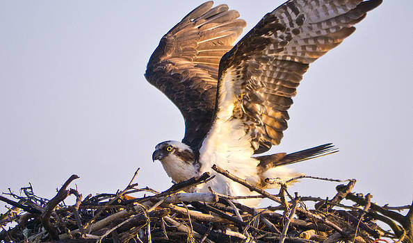 Spreading my wings by Bob Lennox