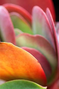 Spring 3 by Dawn Nicoli