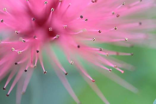Spring 4 by Dawn Nicoli