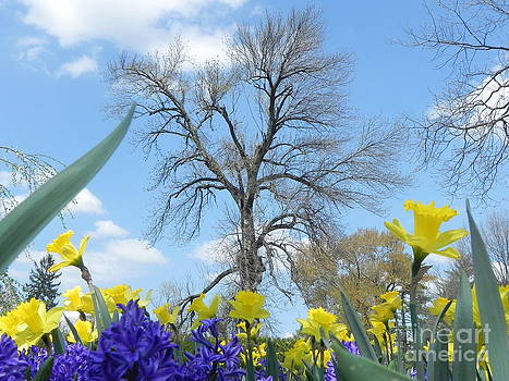Spring Approaches by Sandy Owens