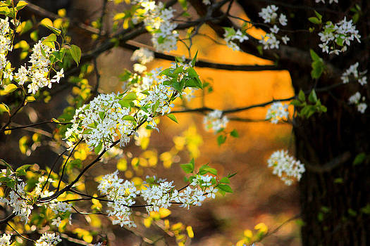 Spring Arrives by Cathy Leite Photography