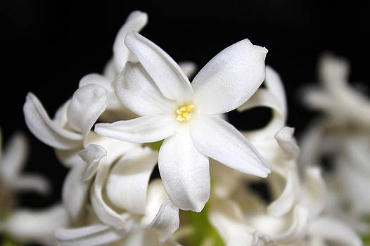 Milena Ilieva - Spring Beauty