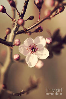 Spring Blossom by Ekaterina LaBranche