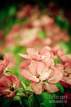 Christina Klausen - Spring Blossoms