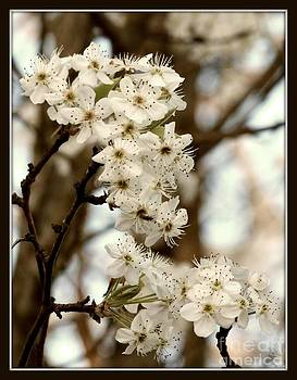 Spring Blossoms by Megan Wilson