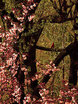 Spring Blossoms by Stacy Root