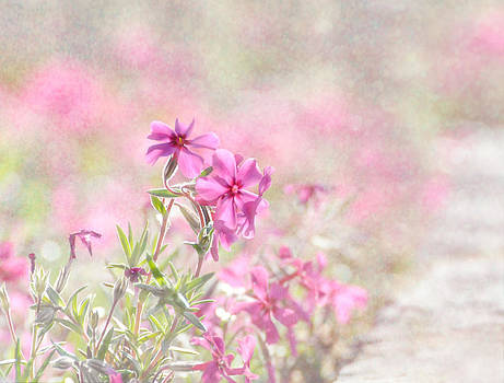 Spring Comes Gently by Tracey Tilson