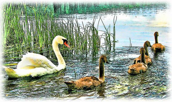 Spring Ducklings by Tom Schmidt