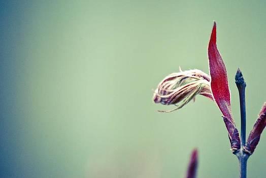 Spring Fibers by Laura Pineda