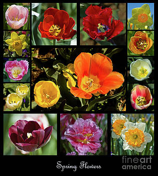 Tim Mulina - Spring Flowers 1