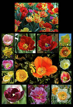 Tim Mulina - Spring Flowers 2