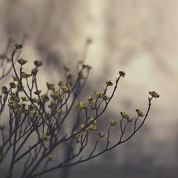 Spring Fog by Brandy Ford