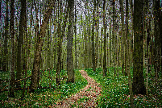 Spring forest path  by Pat Vleer