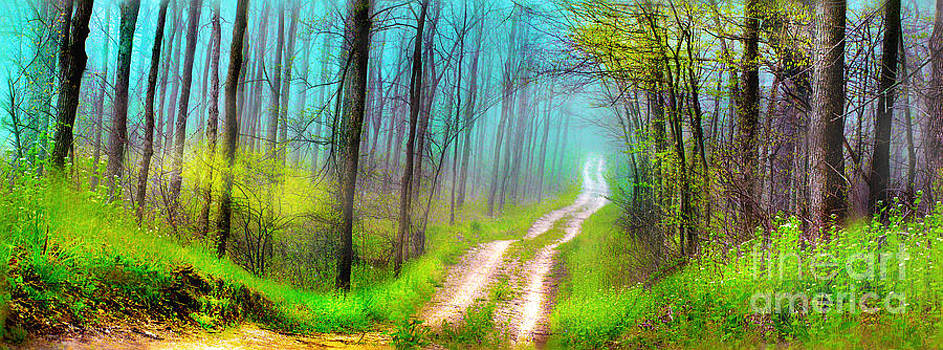 Spring green dirt road by Gina Signore