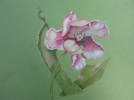 Spring has Sprung by Fran Haas