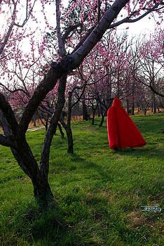 Spring hath sprung 3 by Alana  Schmitt