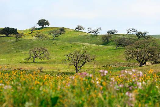 Spring Hillside by Dina Calvarese