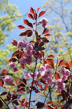 Spring I by Heidi Horowitz