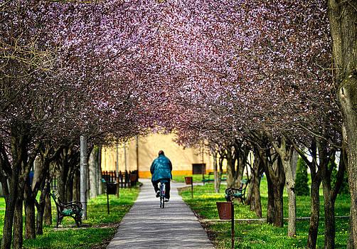 Zoran Buletic - Spring In The Park