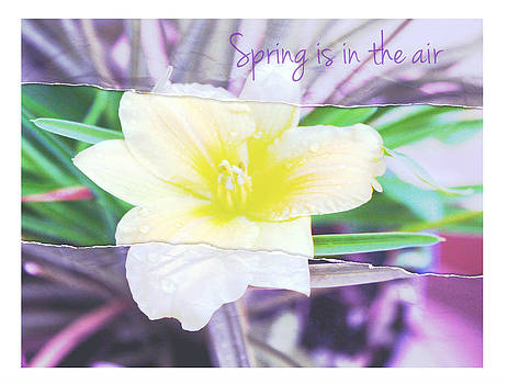 Spring is in the air by Cathie Tyler