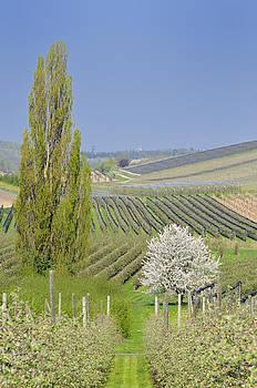 Spring landscape by Matthias Hauser