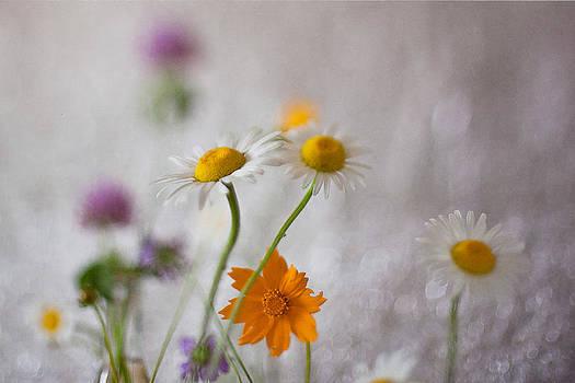 Spring Melody by Brandy Ford