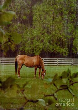 Spring Pasture 2 by Bob Senesac