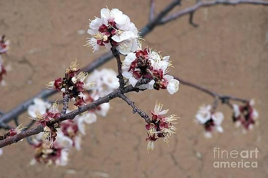 Spring Promises by Dorrene BrownButterfield